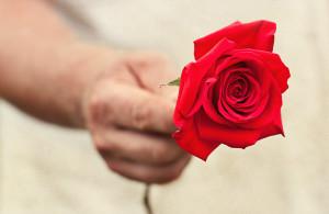 Combien de roses offrir a une femme