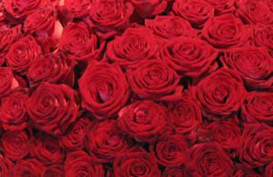 Combien de roses pour un bouquet de mari e for Offrir des roses