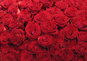 offrir 101 roses