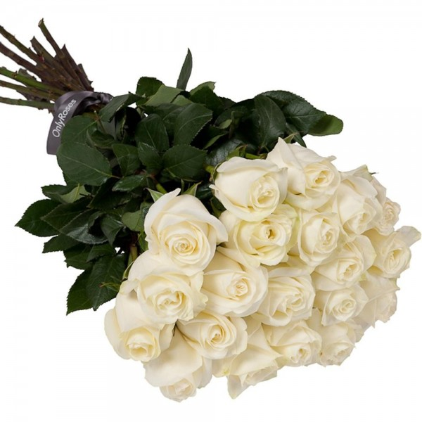 Combien coute un bouquet de 30 roses for Bouquet de roses blanches