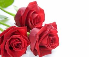 Combien de roses pour dire je t'aime