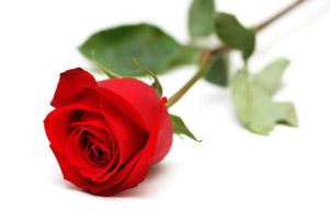 """Résultat de recherche d'images pour """"des roses rouges"""""""